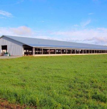 Charla sobre el uso de la genética de carne en lecherías presentará los beneficios de la integración de cadenas productivas