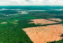 """""""Entendiendo la Amazonia"""", un evento para discutir y entender mejor el universo llamado Amazonía, sin polemizar"""